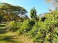 Kenya 2013. At the Lake Naivasha. - panoramio (20).jpg