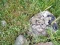 Kertenkele taşı - panoramio.jpg