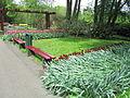 Keukenhof Garden (6).JPG