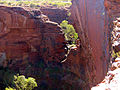 Kings Canyon Gorge.jpg