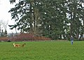 Kirkland walking dogs in park (4575237353).jpg
