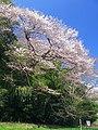 Kitamoto Kitamoto-Nature-Park Edohigan 1.JPG