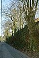 Knotlinde ter bescherming van talud te Zwalm - 372544 - onroerenderfgoed.jpg