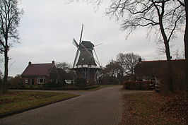Korenmolen van Havelte (januari 2009)