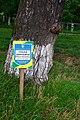Kremenets Rozhyshchenskyi Volynska-Pinus ordinary nature monument-information board.jpg