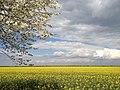 Krostitz - Frühlingsfarben - panoramio.jpg
