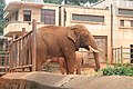 Kunming City Zoo Elephant (9964705014).jpg