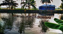 Kuttanad beauty