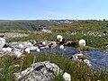 Lærdals sommervej Kæruld - panoramio.jpg