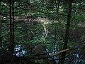 Lūžęs medis - panoramio.jpg