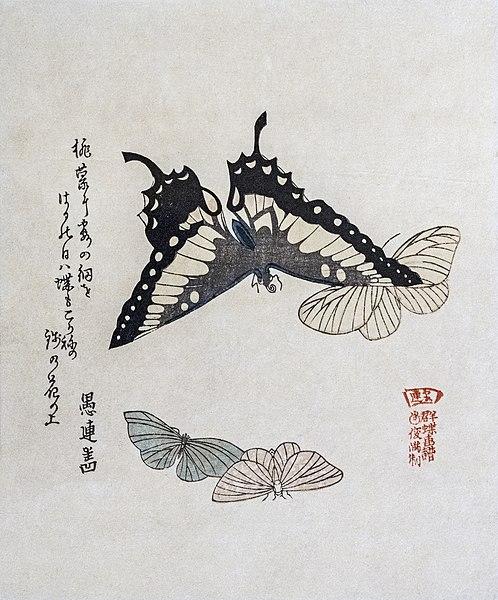 butterflies - image 7