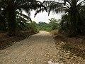 Lae Oram, Simpang Kiri, Subulussalam City, Aceh, Indonesia - panoramio (7).jpg