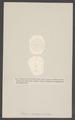 Lagana decagona - - Print - Iconographia Zoologica - Special Collections University of Amsterdam - UBAINV0274 007 02 0022.tif