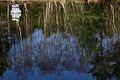 Lake Reflections Chobham Village Surrey UK.jpg
