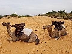 Lampoul desert photo 2 by Serdiuk.jpg