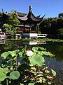 Lan su chinese garden lotus flower lec by andrew parodi.JPG
