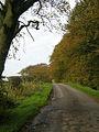 Langlands Road - geograph.org.uk - 269999.jpg