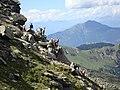 Le caprette ti fanno ciao - panoramio.jpg