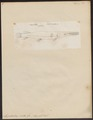 Lepisosteus viridis - 1700-1880 - Print - Iconographia Zoologica - Special Collections University of Amsterdam - UBA01 IZ14400005.tif