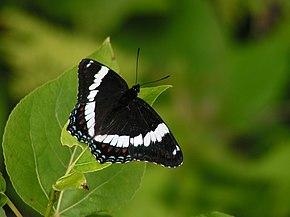 Rencontres en ligne papillons