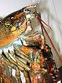 Lobster 03.jpg