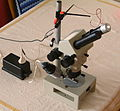 Lomo MBS-2 stereomicroscope with homemade reflection setup.jpg