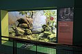 London Zoo Reptile House-8727029288.jpg