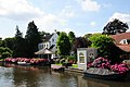 Lovely houses and estates with lots of Hydrangea's at Breukelen at the small Vecht river - panoramio.jpg