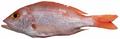 Lutjanus purpureus - pone.0010676.g083.png