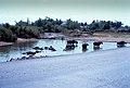 Mấy em TRÂU đang tắm bên vũng nước ven đường.1969 (9680609868).jpg