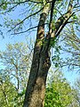 MD.DN.Rediul Mare - park of Rediul Mare - apr 2018 - 66.jpg