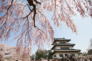 Hirosaki - Hirosaki Castle and cherry blossoms