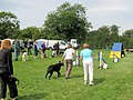 MKDTC Agility Show, Waiting for your turn in Class 1 - geograph.org.uk - 1439021.jpg