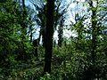 MOs810 WG 15 2016 (Pyzdry Forest II) (Michalinow Olesnicki, old ev. cemetery) (5).JPG