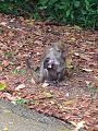 Macaque with baby.jpg