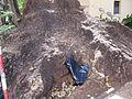 Madeira em Abril de 2011 IMG 1737 (5663192027).jpg