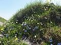 Malá Fatra, kvety v júni (2).jpg