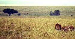 Savanna at Ngorongoro Conservation Area, Tanzania.