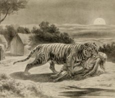 Tigre Wikip 233 Dia A Enciclop 233 Dia Livre