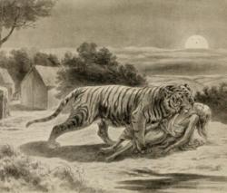 Warrior Cats Cougar