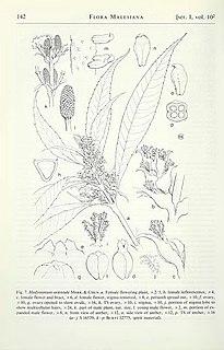 Maureen Elizabeth Church Welsh botanist and illustrator