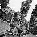 Meisje met jonge leeuwen in Artis, Bestanddeelnr 912-5976.jpg