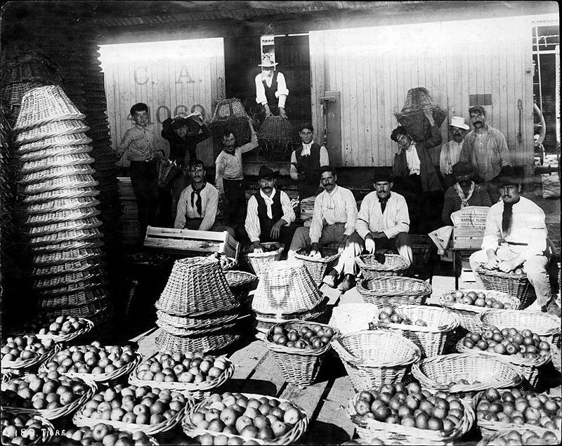 Mercado frutos tigre 1902.jpg