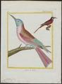 Merops nubicus - 1700-1880 - Print - Iconographia Zoologica - Special Collections University of Amsterdam - UBA01 IZ16800335.tif
