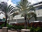Miami International Airport - MIA - panoramio (4).jpg