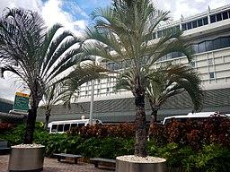 Miami International Airport - MIA - panoramio (4)