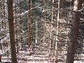 Millington Woods - panoramio.jpg