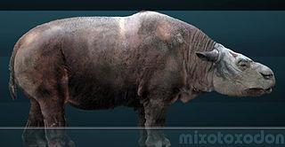 Toxodonta suborder of mammals