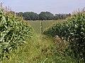 Monarch's Way, Maize - geograph.org.uk - 805609.jpg