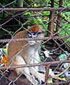 Monkey in Ekiti.jpg